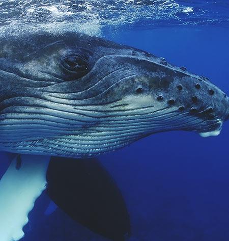 Gentle Giants of the Sea